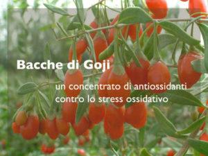 Bacche di Goji: un alleato contro lo stress ossidativo e i radicali liberi
