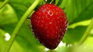 rosso-frutti