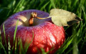 mela rossa 300x188