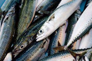 pesce omega 300x200