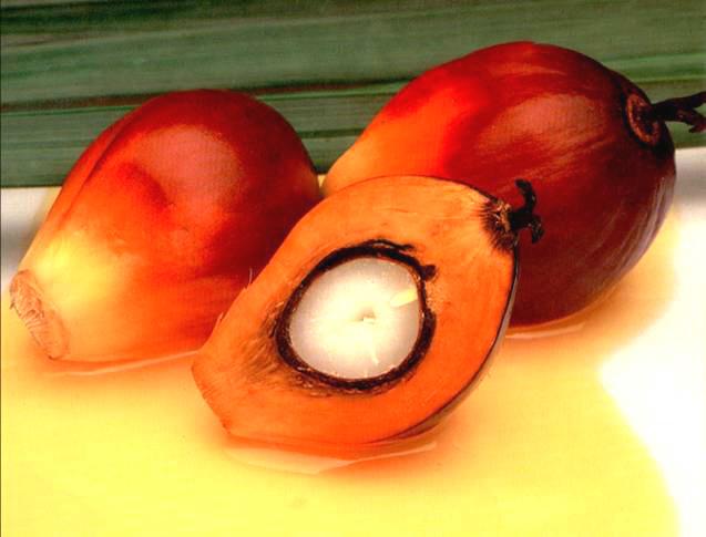 l'olio di palma è dannoso?