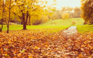 autunno 300x188