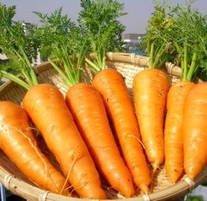 Vitamina C! Facciamone un pieno per affrontare i cambiamenti di stagione!