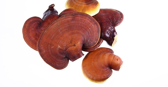 Reishi fungo