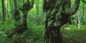 funghi-bosco
