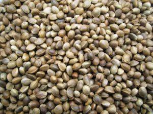 canapa-bio-semi