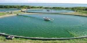 clorella-alghe
