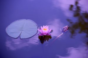 la magia dell'Intuito....yoga, mente, corpo e pratica.