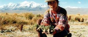 foto di un coltivatore di maca peruviana