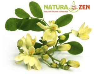 foto dei fiori e foglie di moringa oleifera