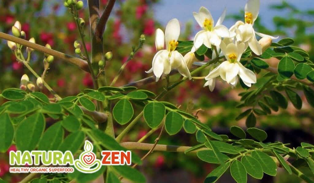 foto dei fiori e della pinata di moringa oleifera