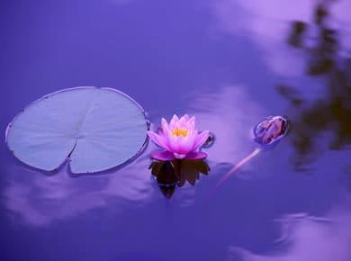 yoga loto f